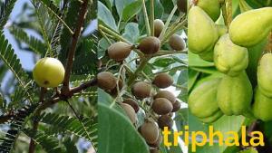 triphalaantiossidanteayurvedicoscuolasimamilano