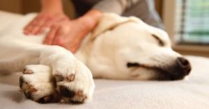 Dove (e come) è meglio accarezzare il cane? 10 cose che ai cani proprio non piacciono