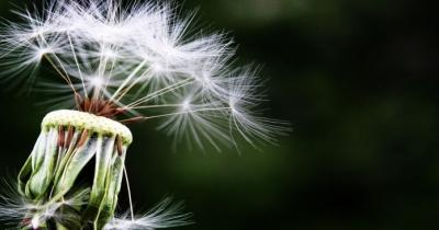 Allergy Day: 5 maggio con la Serie A