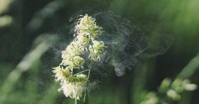 Così puoi combattere le allergie con rimedi naturali