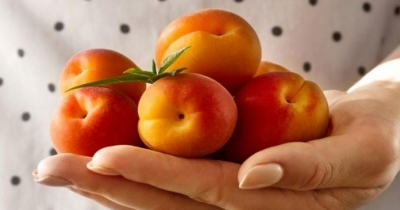 In estate, mangia albicocche, dimagrisci e proteggi la pelle